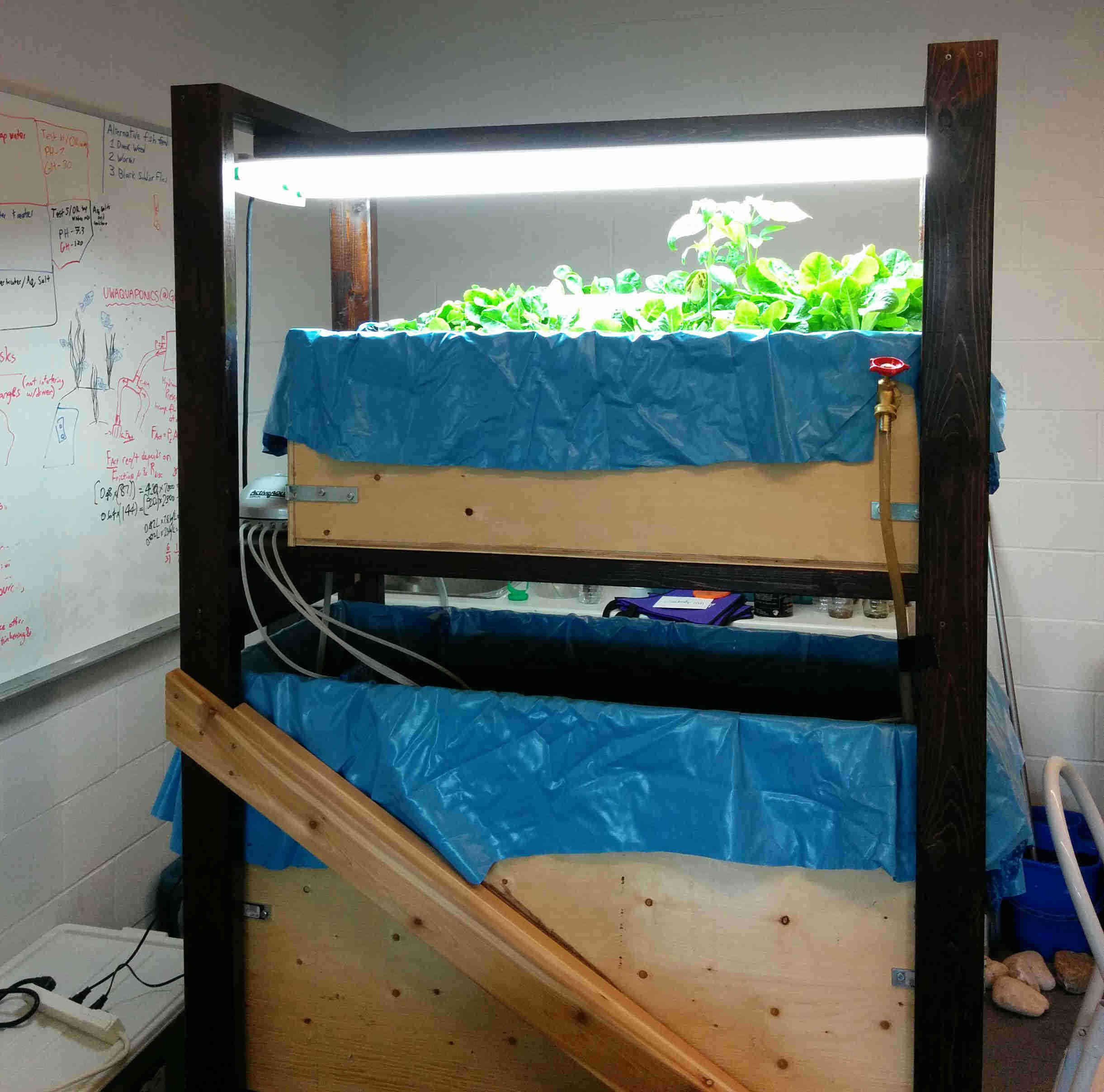 Fig 3: Aquaponic system 2 in 2016.