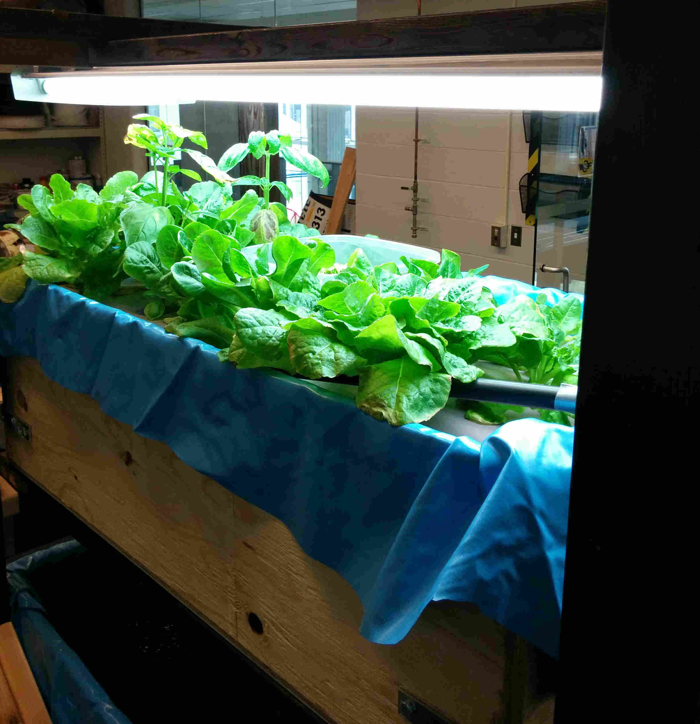 Fig 4: Deep water culture grow bed with plants on floating rafts.